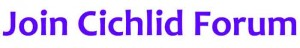 cichlid forum