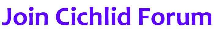 cichlidzone forum